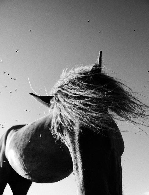 Horses_090.jpg