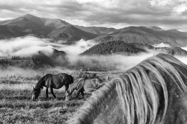 Horses_045.jpg