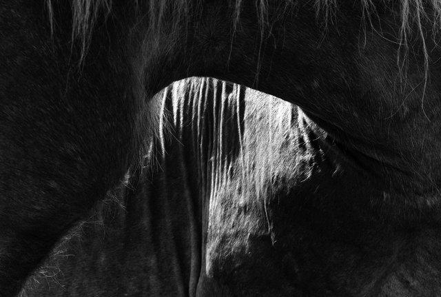 Horses_027.jpg