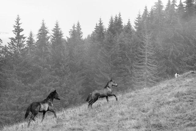 Horses_062.jpg