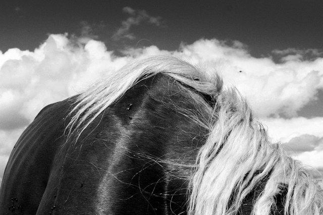 Horses_110.jpg