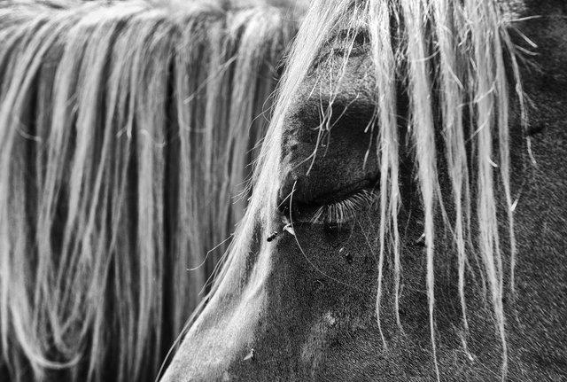 Horses_055.jpg