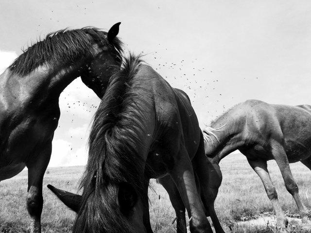 Horses_103.jpg