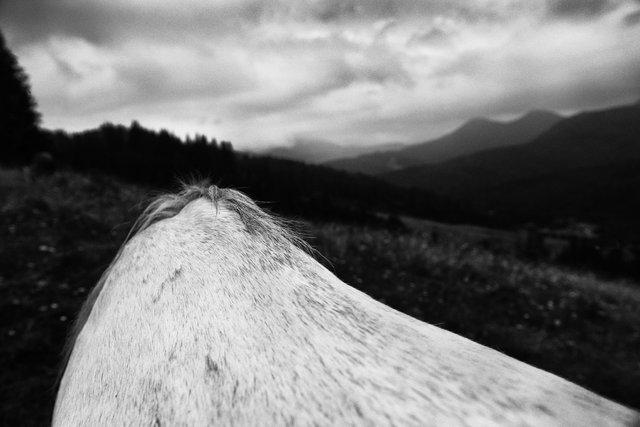 Horses_005.jpg