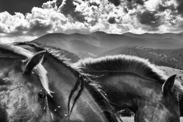 Horses_111.jpg