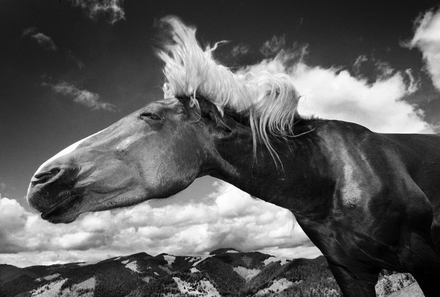 Horses_016.jpg