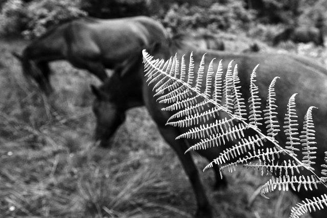 Horses_054.jpg