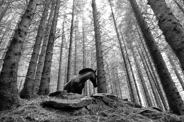 Horses_008.jpg