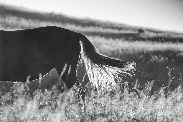 Horses_064.jpg