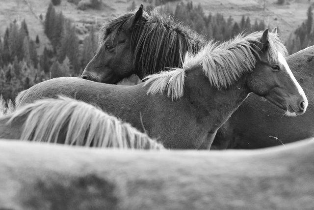 Horses_078.jpg