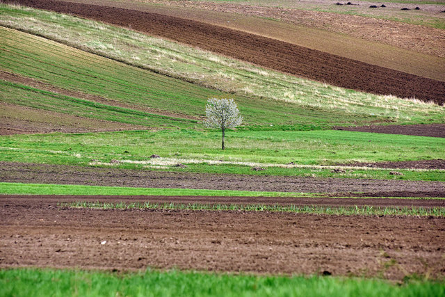 Terra Galicia_(Yurko Dyachyshyn)_03.jpg