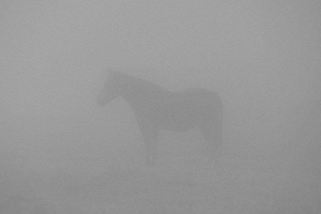 Horses_004.jpg
