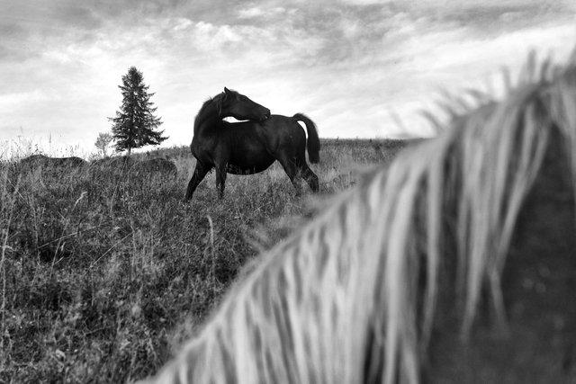 Horses_052.jpg