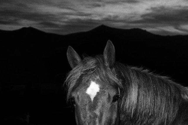 Horses_114.jpg