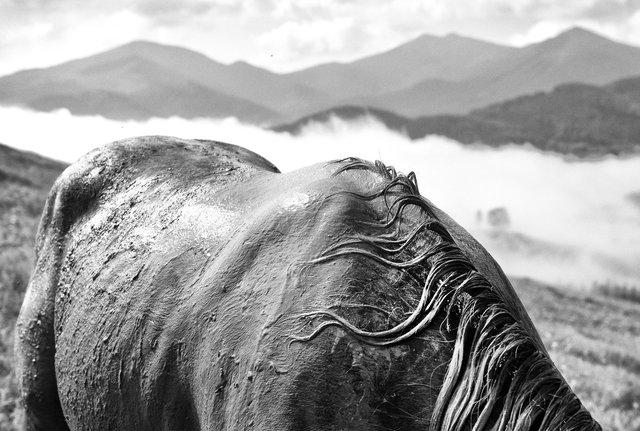 Horses_068.jpg