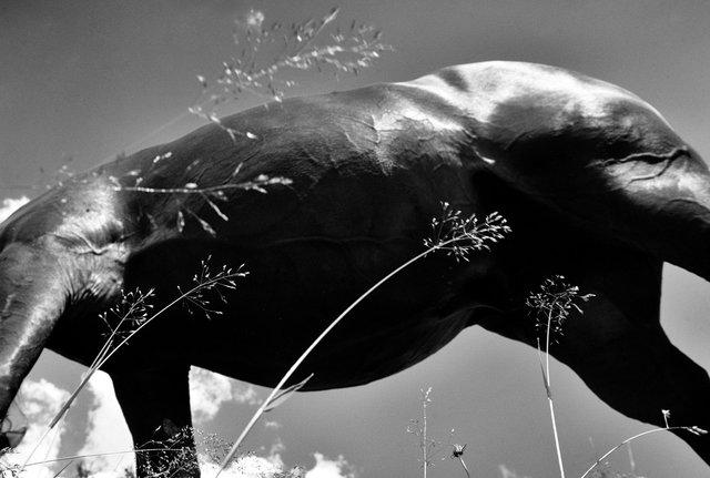 Horses_018.jpg
