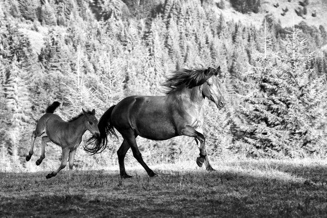 Horses_065.jpg