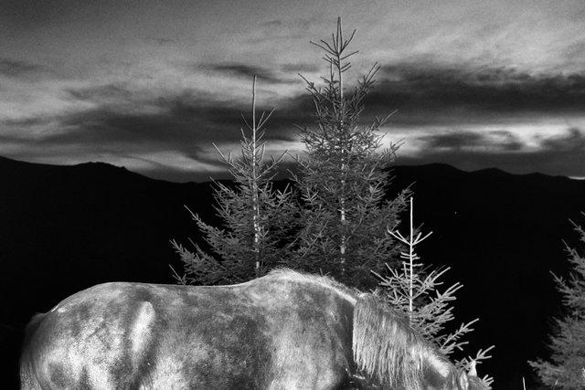 Horses_014.jpg
