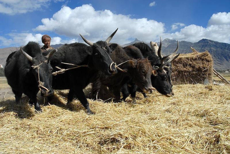 Ladakh_35.jpg