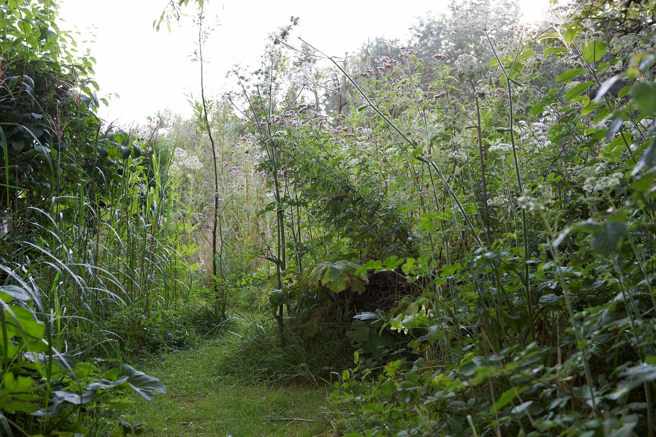 11A-Jardin gilles- 49 1.jpg
