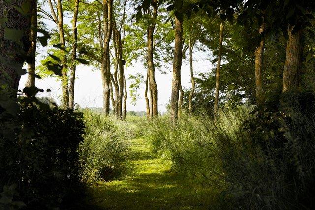 jardin lansau robiniers1306-3-96-2244P.jpg