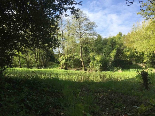 04-Marais herbe-IMG_8539.jpg