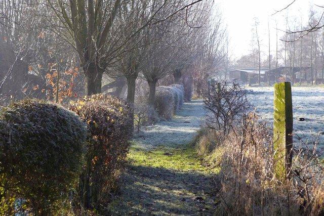 jardin lansau 32 1-96-2244P.jpg