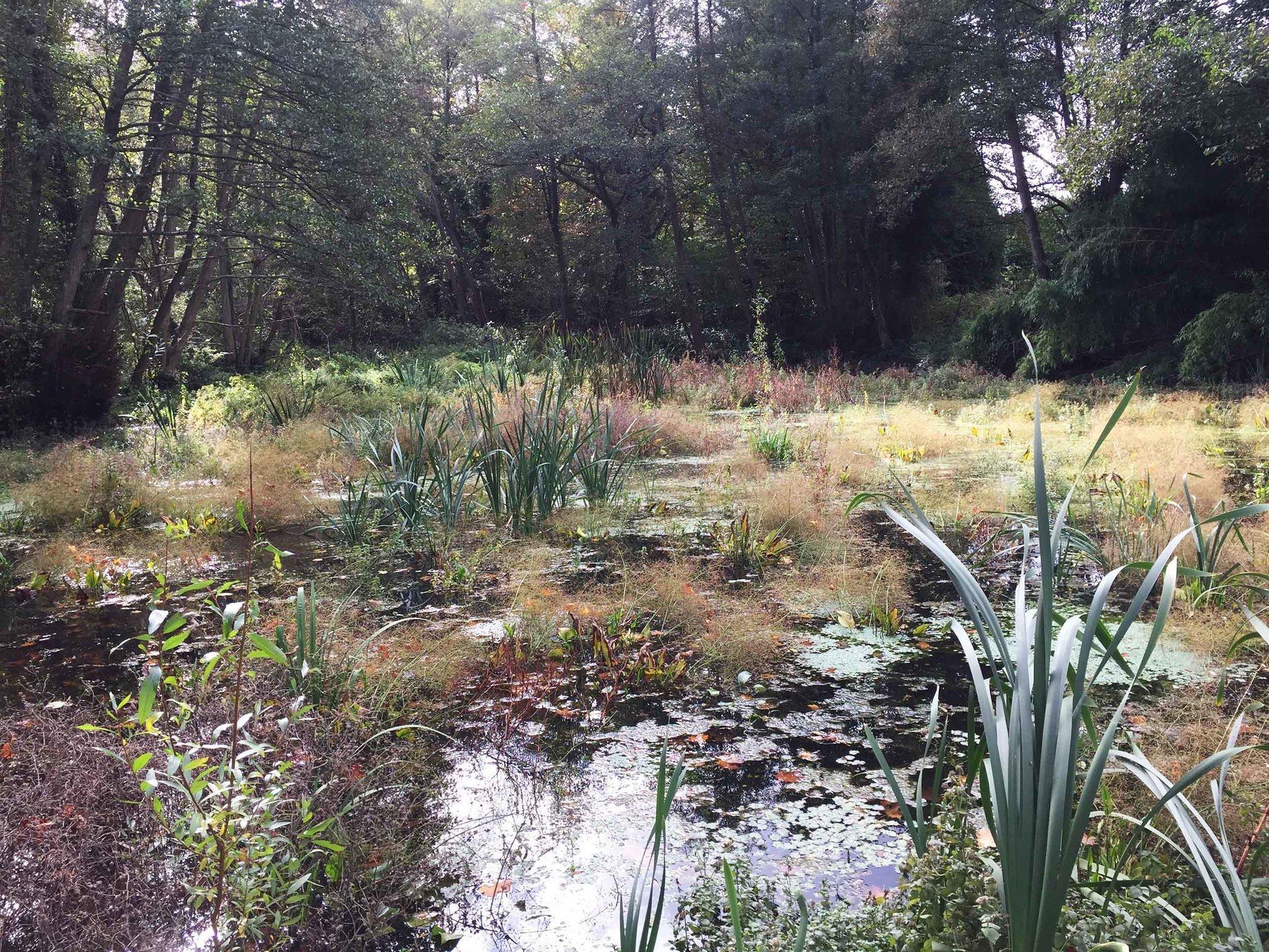 06-marais vegetation-IMG_0253.jpg