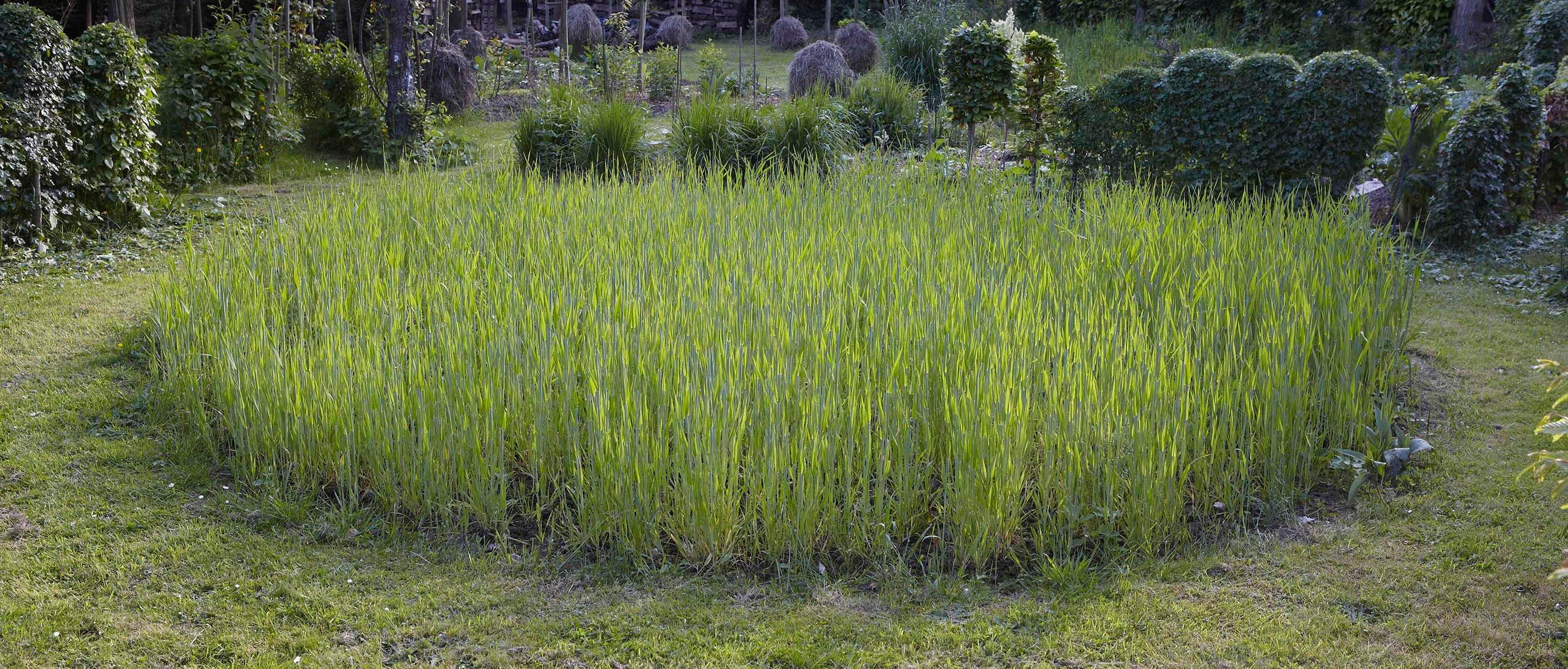 VIEWBOOK_rond de blé_MG_6877.jpg