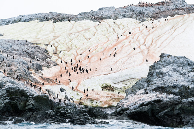 Chinstrap Penguin Colony, Antarctica