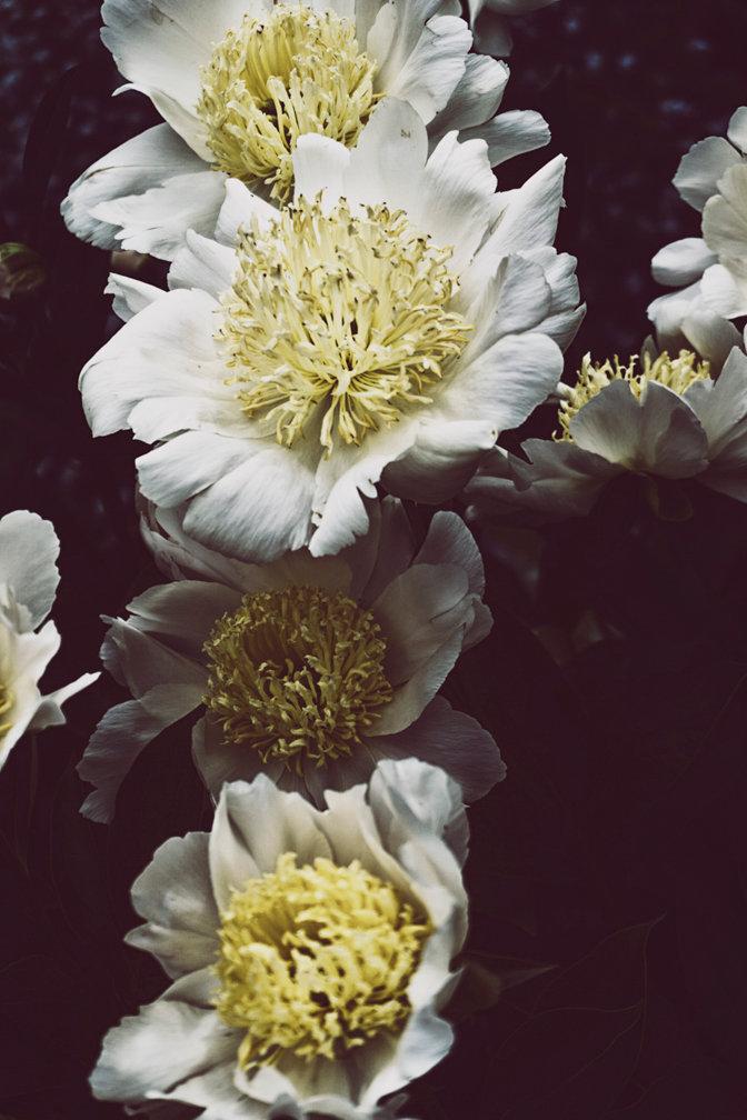M R_flowersforAli_007.jpg