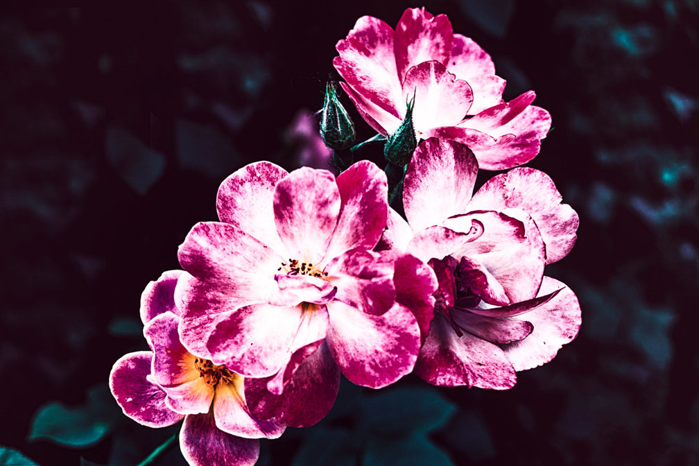 M R_flowersforAli_001.jpg