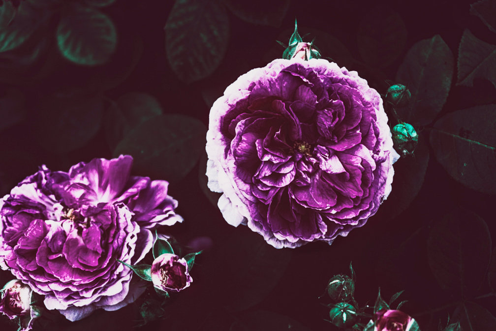 M R_flowersforAli_002.jpg
