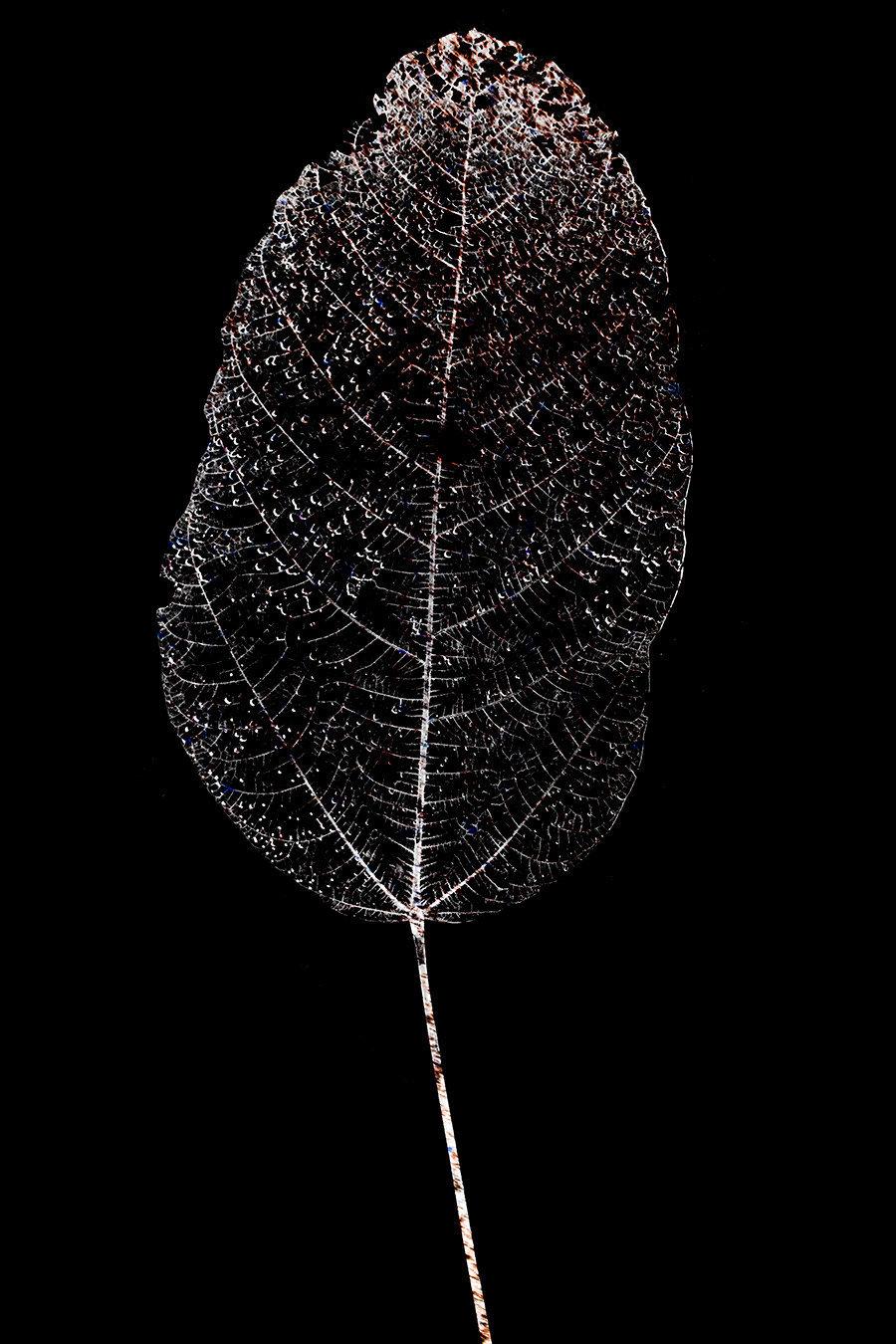 20180823-R0013343-Moon-Leaf-Paul-Cupido-Amazônia-2018-lowres.jpg