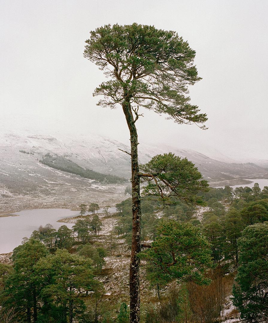Jeroen Toirkens, Scotland 2, 2017.jpg
