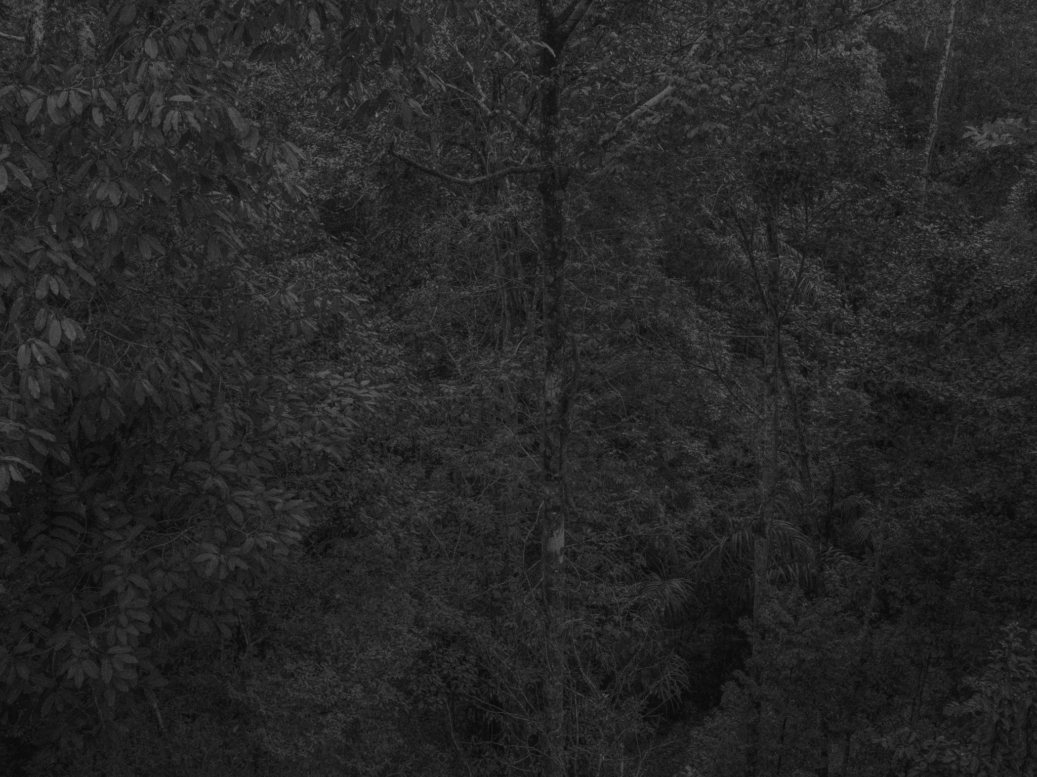Paul-Cupido-Amazonia-Sense-of-Place-CMYK.jpg