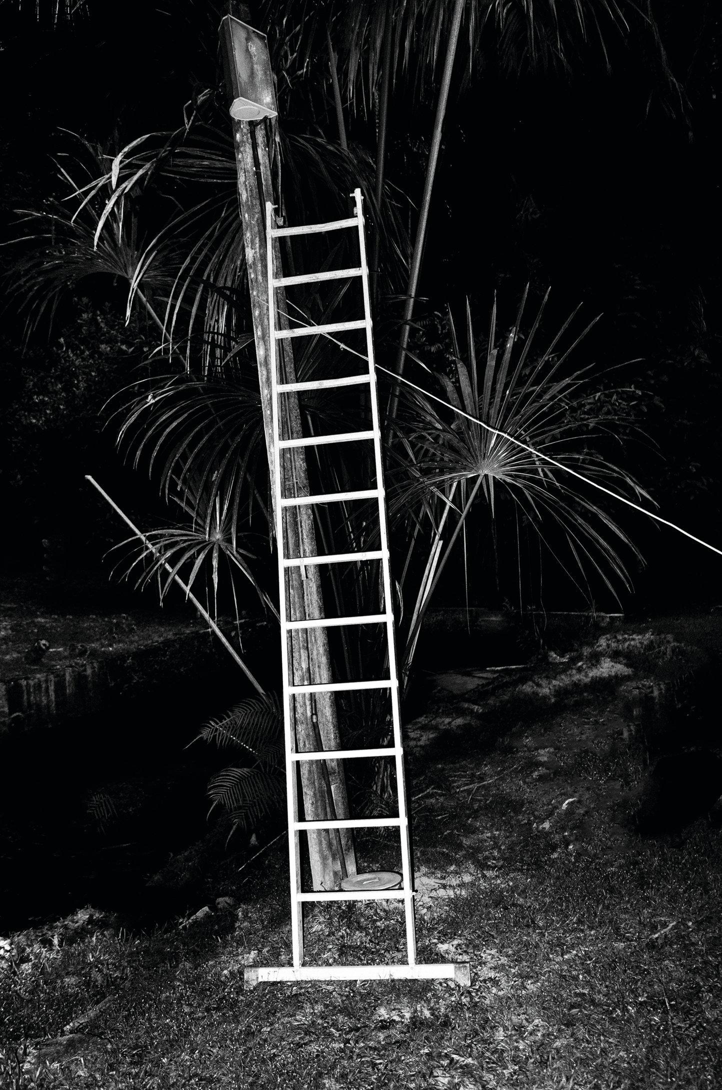 Paul-Cupido-Amazonia-Insomnia-iii-stairwaytoheaven-CMYK.tif