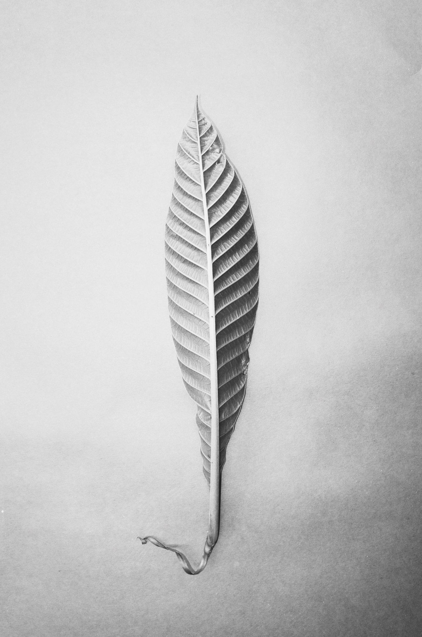 Paul-Cupido-leaf.jpg