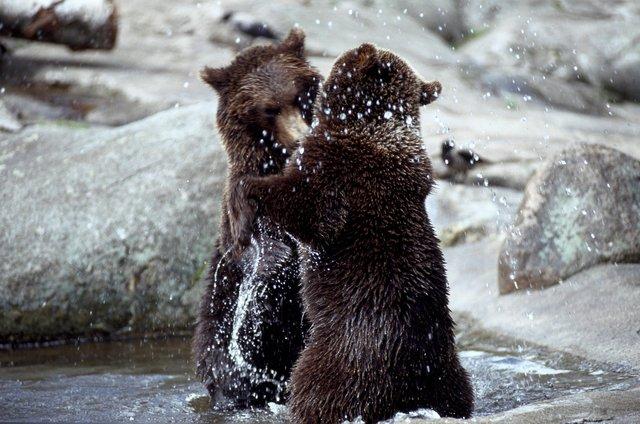beren.jpg