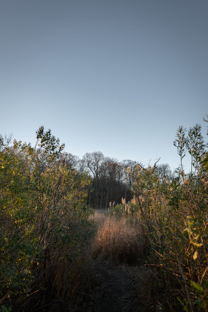 Painterlylandscape2.jpg