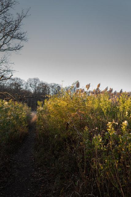 Painterlylandscape1.jpg