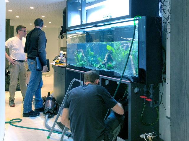 Einbau & Installation des neuen Aquariums
