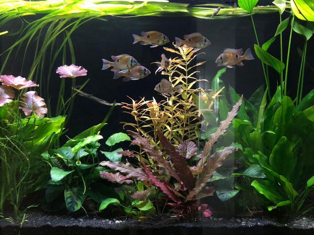 Beruhigender Blick ins Aquarium ✓