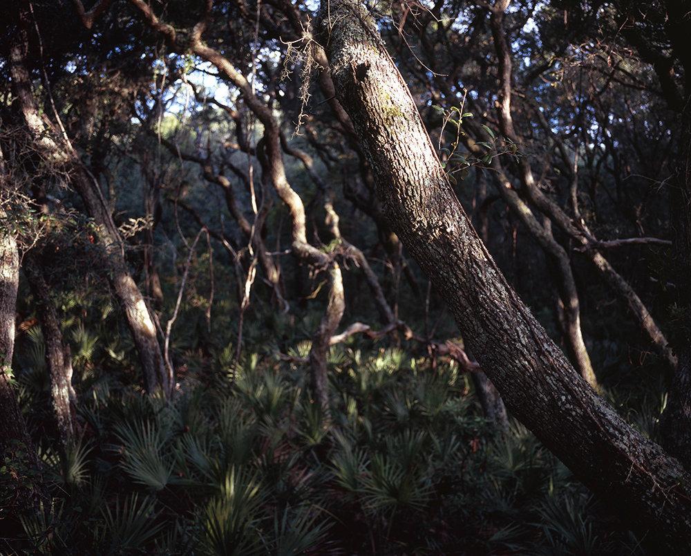 04_tree17 copy.jpg