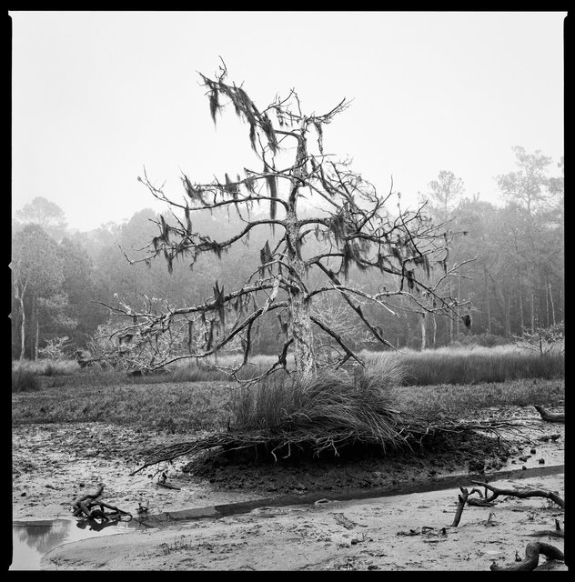Dead Cedar, Killman Field Wetlands, 2016