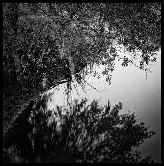 Killman Field Pond, 2017