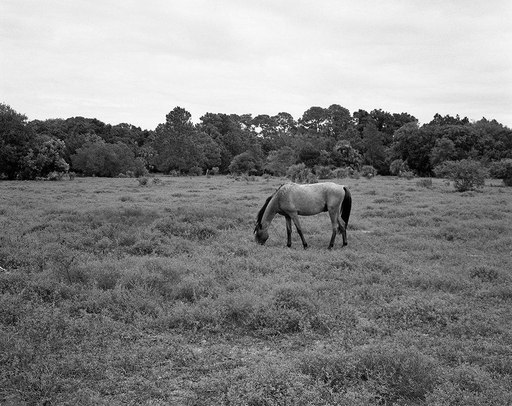 Wild Horse near Dungeness Beach