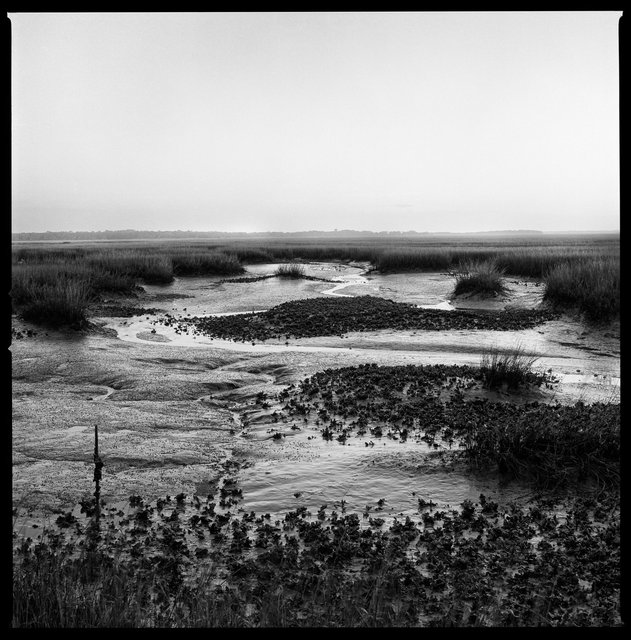 Marsh and Oyster Beds at Low Tide, South End, 2016
