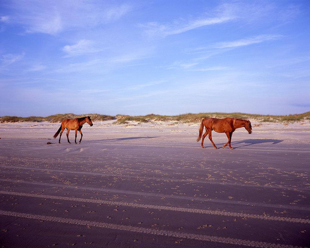 Wild Horses on Dungeness Beach