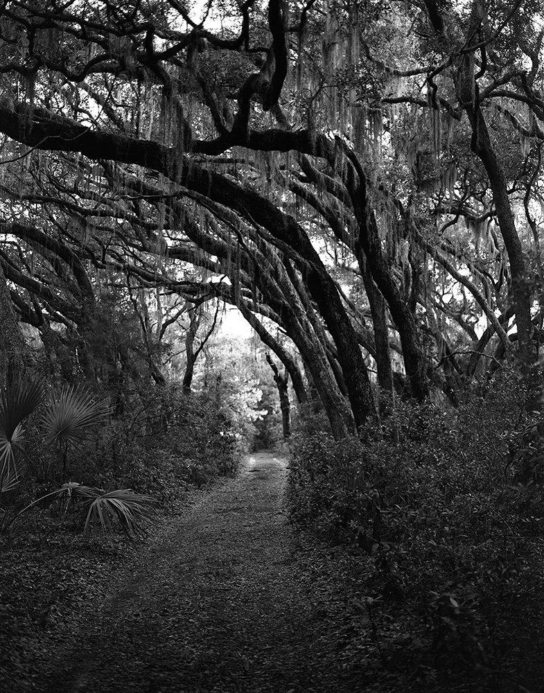11_trees001.jpg